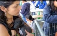 """¿Quiere adoptar un """"cachupín"""": el sábado habrá una Feria de Adopción de Mascotas"""