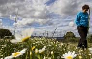 Alergias, las invitadas de piedra de la Primavera
