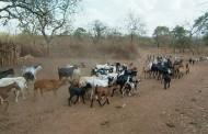 Deterioro del medioambiente: Faenas mineras y sobrepoblación de caprinos