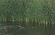 Río abajo, río arriba, yo buscaba a mi río.