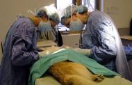 Comuna de Ovalle no fue incluida en primera fase del Plan de Esterilización de Mascotas