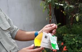 Instalan más de 600 trampas para control de mosca de la fruta