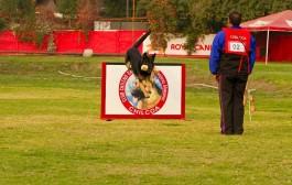 Perros ovejeros de todo Chile competirán en muestra canina en Ovalle