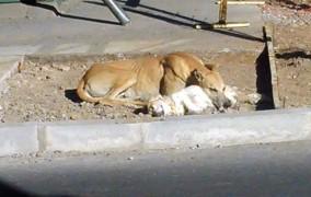 Día del perro callejero: lejos de ser un motivo de celebración