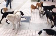 Frente Amplio Ovalle invita a conversatorio sobre Tenencia Responsable y Bienestar Animal