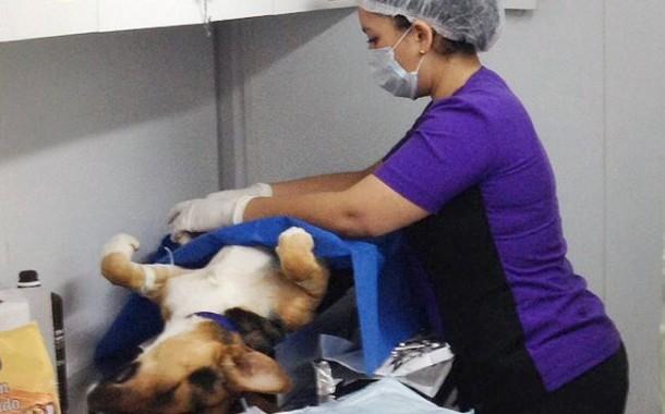 Invitan a esterilización de perros gratuita en Punitaqui