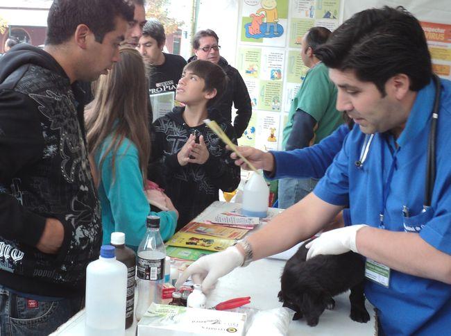 Este sábado se realizará la primera Feria de Adopción de Mascotas del año en Ovalle