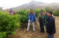 Buscan mejorar productividad y ventas de 41agricultores citrícolas de Punitaqui