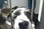 Cachupines buscarán un hogar en la 2ª Feria de Adopción de Mascotas