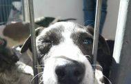 Invitan a quinta Feria de Adopción de Mascotas en Ovalle