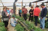 Enseñan a hortaliceros de Monte Patria como protegerse de las plagas