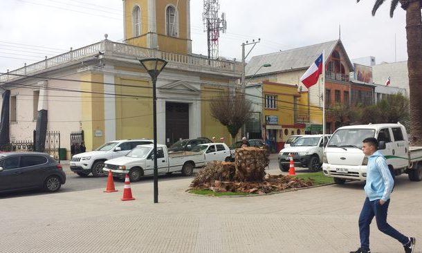 Cortan joven palmera trasplantada en la Plaza de Armas
