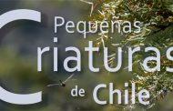 Las pequeñas criaturas que han asombrado a los televidentes chilenos