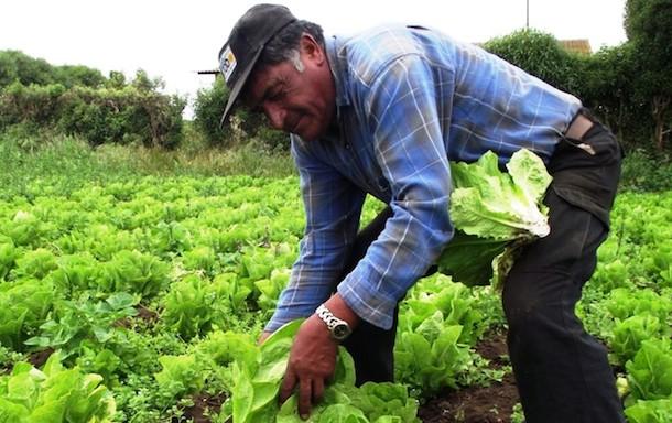 Pequeña agricultura se verá beneficiada con alianza entre INDAP y Banco Estado