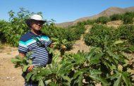 Pequeños productores de El Palqui piden reevaluar programa de Zonas Rezagadas