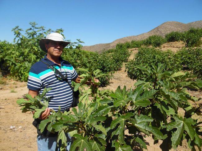 Destinan 1000 millones para agricultores de la Región