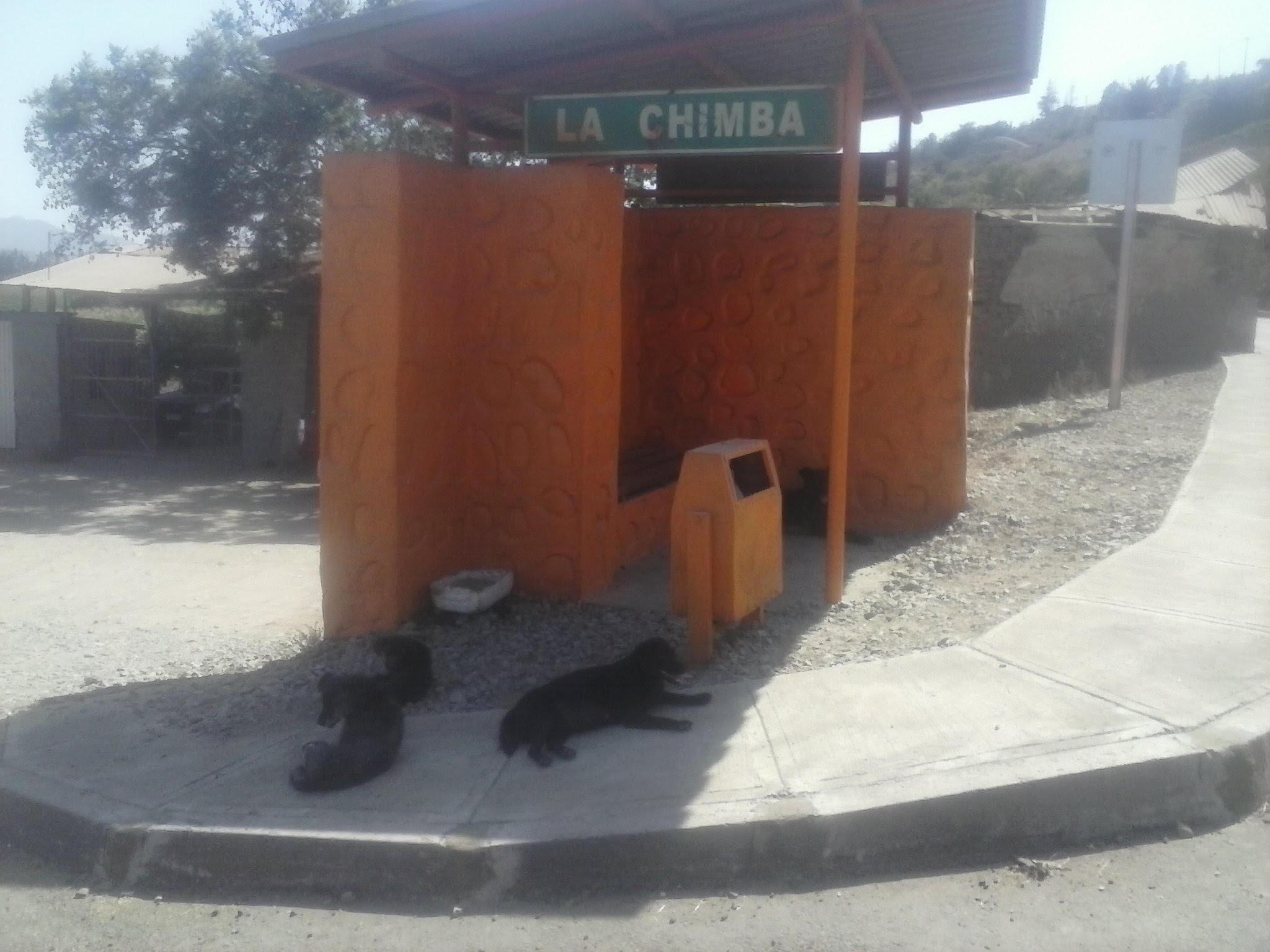 Perros callejeros son un problema en La Chimba