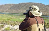 Científicos ciudadanos monitorean aves en desembocadura del Río Limarí