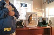 Hasta un Tucán requisa la policía en un domicilio particular