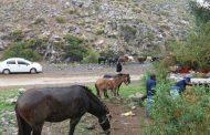 51 personas aisladas por crecida de río en Salamanca