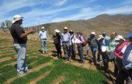 Puras flores lanzan agricultores a labor del INIA en la provincia del Limarí