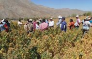 Celebran Semana de la Quinoa en Liceo Jorge Iribarren Charlín de Hurtado