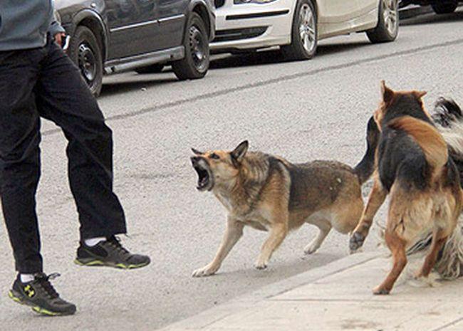¿Los perros de la calle tienen más derechos que las personas?