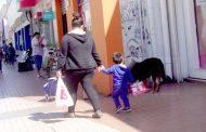 Los perros en las calles: un problema sin solución