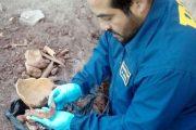 Excavaban en el patio para construir y descubrieron osamentas humanas