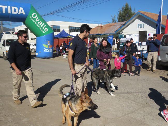 """Alrededor de un centenar de mascotas participaron en """"Perrotón""""  en Ovalle"""