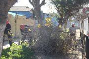 Municipio punitaquino realiza poda de árboles en avenida principal de la comuna