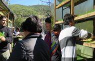 Evalúan positivamente experiencia en cultivo de forraje hidropónico realizado en el Limarí