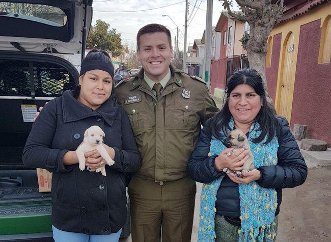 Carabineros rescató a camada de cachorros en Monte Patria