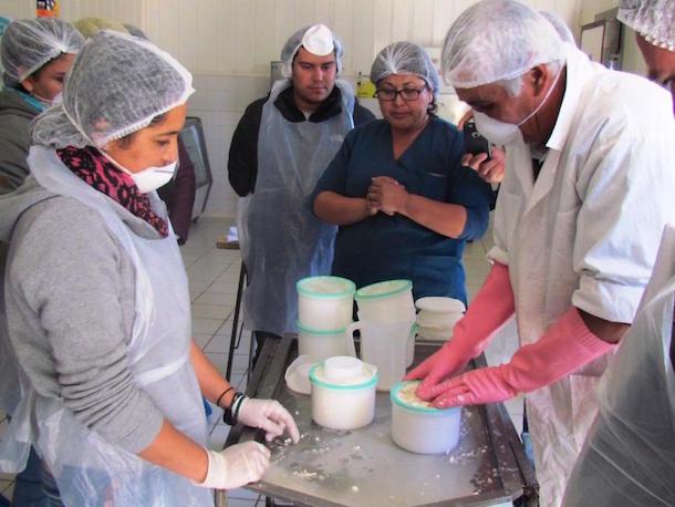 Técnicos PRODESAL-PADIS se capacitan sobre la correcta elaboración de queso de cabra