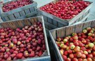 Recuperan 96 contenedores de fruta avaluados en más de 300 mil pesos