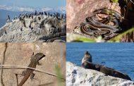 REGIÓN: Contabilizan variadas especies de plantas, reptiles, aves y mamíferos en sector Alto Coquimbo