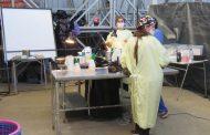 Más de 400 mascotas fueron esterilizadas en la comuna de Punitaqui