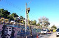 Viento desprende gran rama de árbol sobre la calle y corta suministro de electricidad