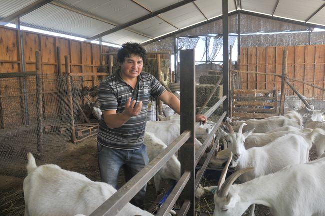 Queso de cabra: nuestro más emblemático recurso gastronómico