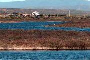 Declaran humedales de Tongoy como Santuario de la Naturaleza