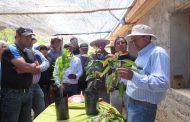 Pequeños productores de limones aprenden a hacer injertos y expandir sus huertos