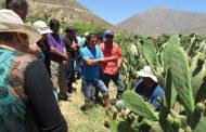 Con el objetivo de aprender sobre manejo de cabras y frutales, agricultores de Petorca visitaron el Limarí