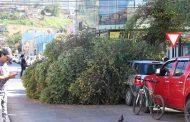 Árbol cae sobre vehículo en pleno centro de Ovalle