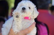Feria de adopción de mascotas en Ovalle este fin de semana