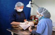 Ovalle: Realizarán jornadas de registro y esterilización de mascotas