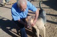Dan de alta a perro héroe ovallino  y vuelve con su familia