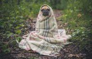 Cómo cuidar a las mascotas en días fríos